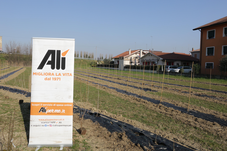 Piantati 700 alberi a Voltabarozzo