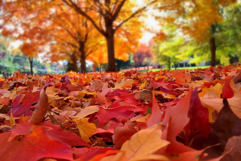 Gli alberi e l'autunno: il foliage