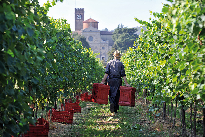 Sapori antichi per storie di oggi: i vini dell'Abbazia di Praglia