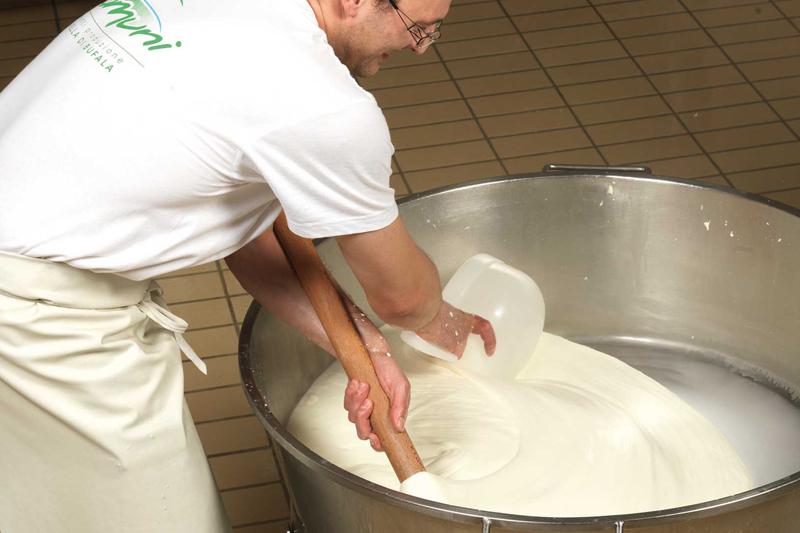 La Mozzarella di Bufala di Treviso