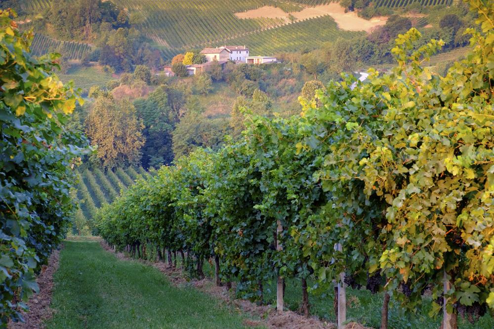 Passeggiando tra le vigne nelle terre del Prosecco