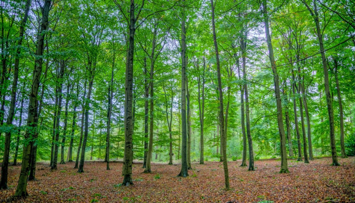 I boschi piantumati da Alì sono certificati FSC