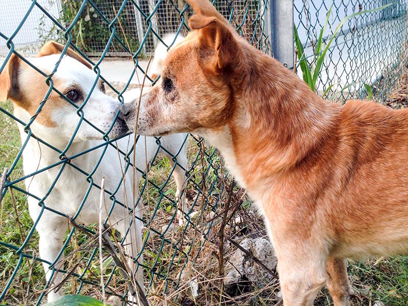 DONAZIONE ENPA (Ente Nazionale Protezione Animali)